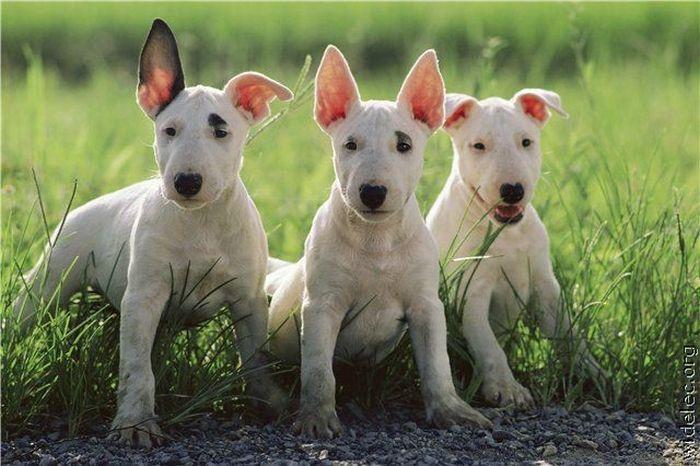 Симпатичные щенки (200 фото)