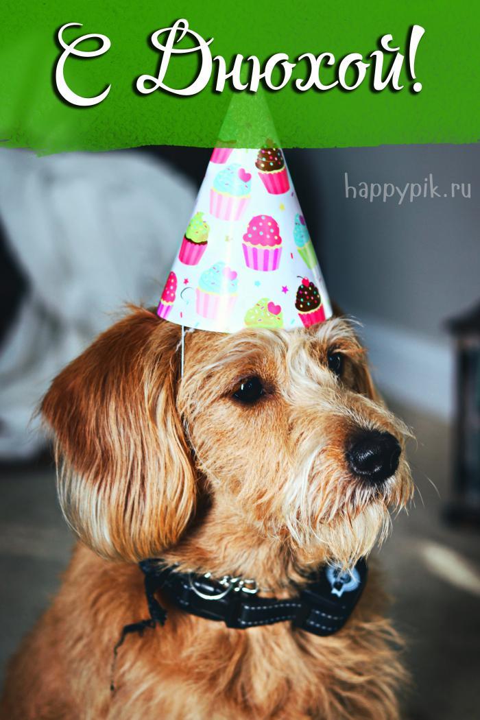 Поздравления с Днем рождения другу (140 картинок)