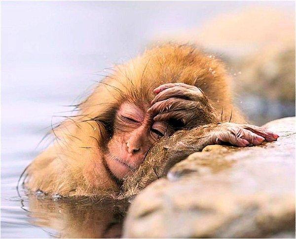 Смешные открытки для тех, кто немного устал (55 картинок)