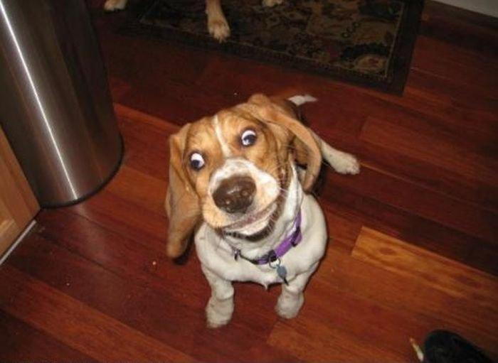 Самые смешные собаки (220 фото)