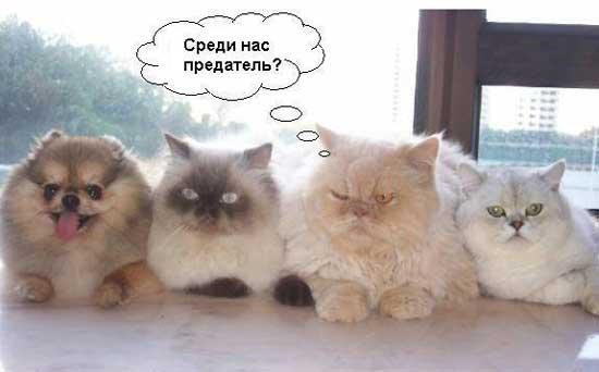 Смешные приколы про котов (230 фото)