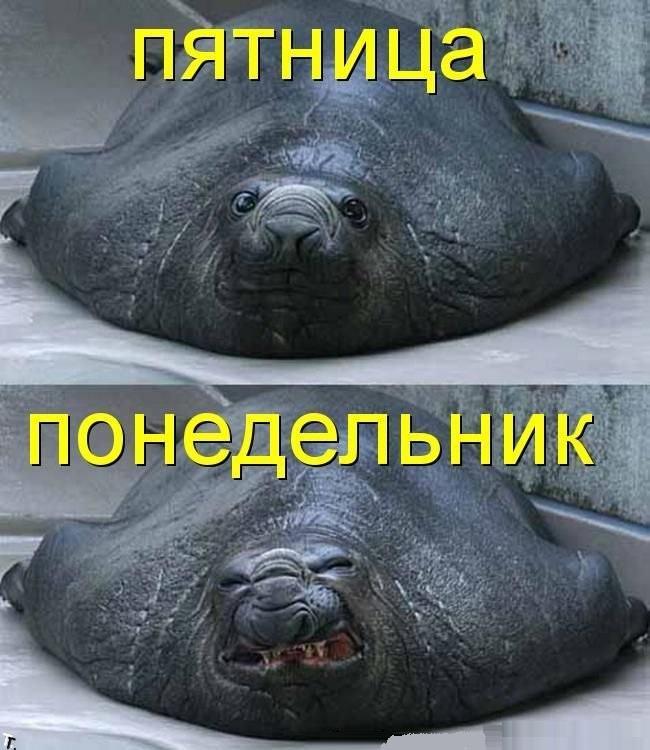 Понедельник-день тяжелый (140 картинок)
