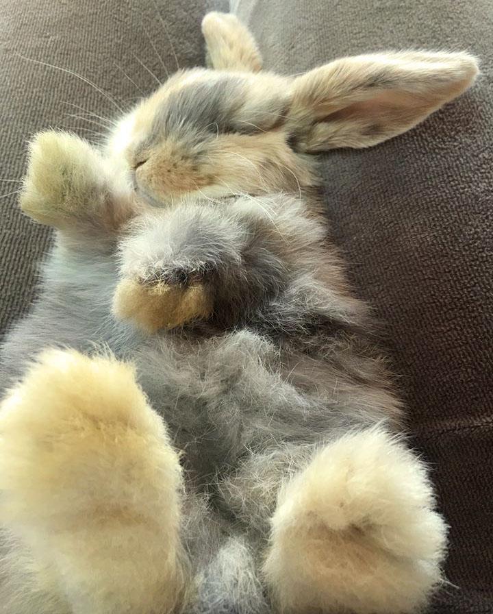 Смешные приколы про кроликов (100 фото)